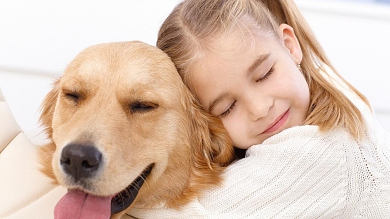 Healing Animals