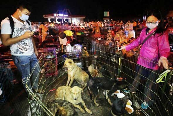 Los comerciantes sin tacto en el corazón roban a los perros que v...