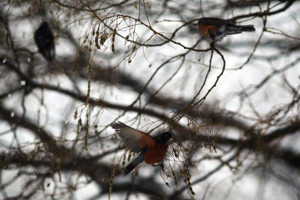 Las aves en los parques de Nueva York también sufren los efectos gélidos...