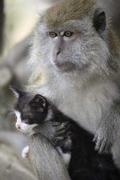 Hay madres que harían cualquier cosa por sus hijos, y Kimon es una de el...