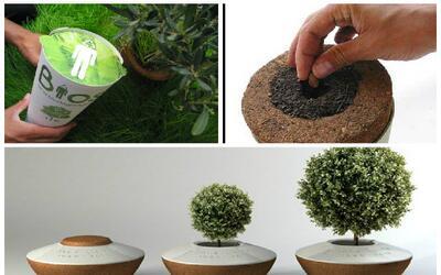 Convierte las cenizas de un ser querido en un árbol