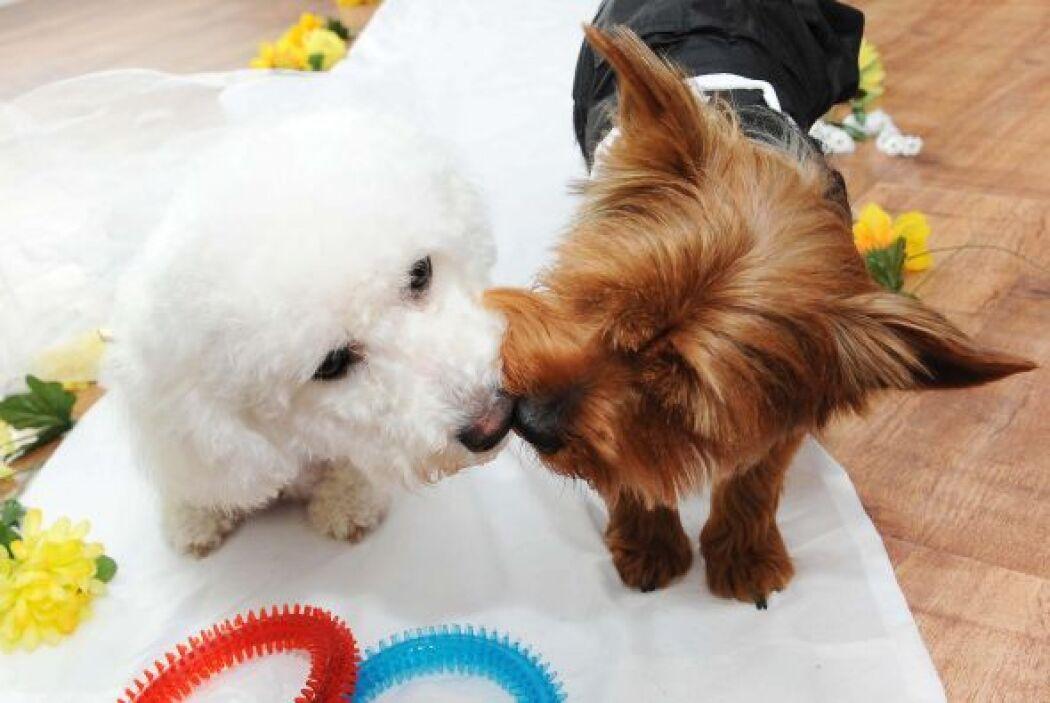 La dueña de estos perritos decidió organizarles una celebración con past...