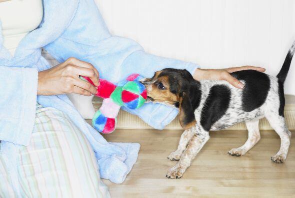 Y si para intentar sacarlo de su aburrimiento le das un juguete, pero en...