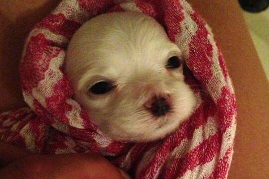 Esta es una de los nuevos bebes de Alejandra. ¿Linda verdad?