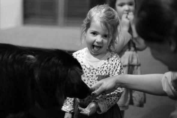 La entrada es sin mascotas, pues el contacto de perros no domesticados c...
