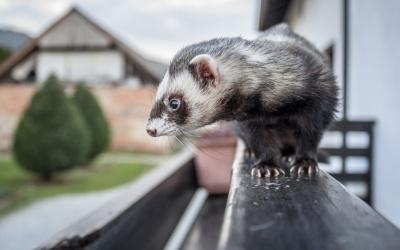 Apuesta a una nueva y peculiar mascota pero, antes, conócela a profundid...