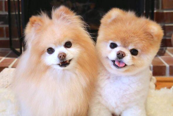 Se trata de Buddy y Boo, ellos se han convertido en todas una celebridades.