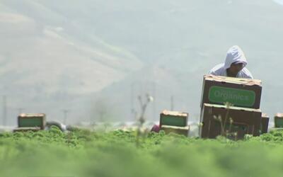 ¿Cómo afectaría al sector agrícola una posible ola de deportaciones?