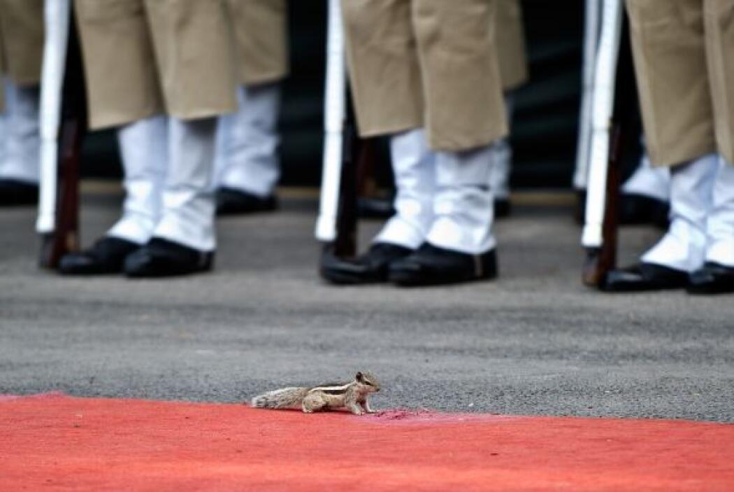 Una ardilla corre delante de los guardias de honor en fila durante un en...