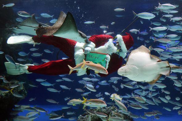 Mientras Santa está debajo del agua aprovecha para alimentar a los peces...