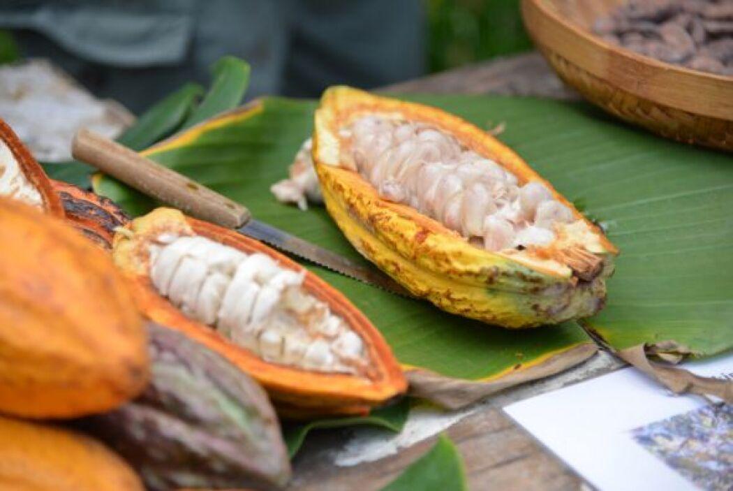 El chocolate proviene de una fruta llamada cacao.