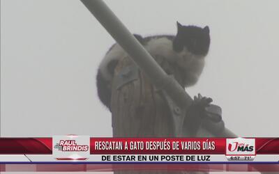 Rescatan a un gato después de nueve días
