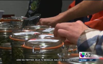 Presentan una propuesta de Ley que legalizaría el uso de marihuana medic...