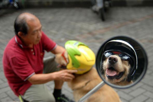 """""""Muchas personas están interesadas en tener una fotografía con los perro..."""