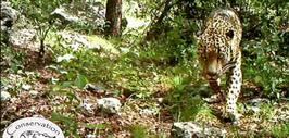 Noticias Homepage jaguar.jpg
