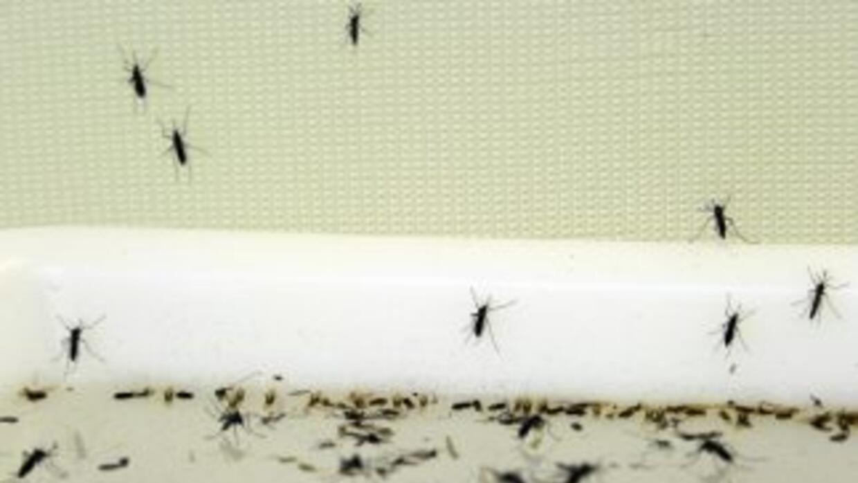 El dengue en la semana 33 de 2010 provocó 5,290 casos confirmados, año q...
