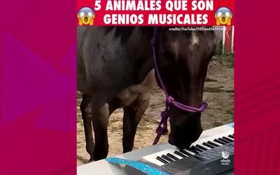 5 animales que son GENIOS musicales