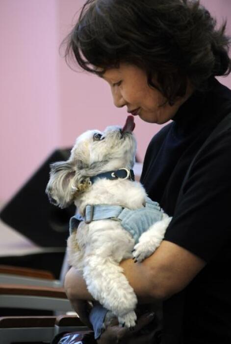 Los canes fueron reconocidos por sus dueños con muestras de cariño.