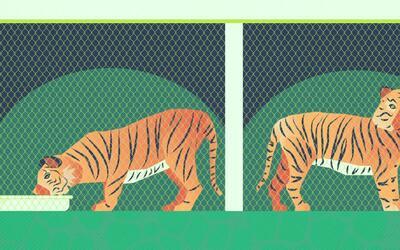Las granjas de tigres son cómplices de su caza y comercio ilegal