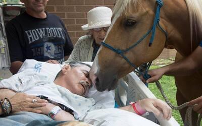 Hispano veterano de guerra es besado por uno de sus caballos afuera del...