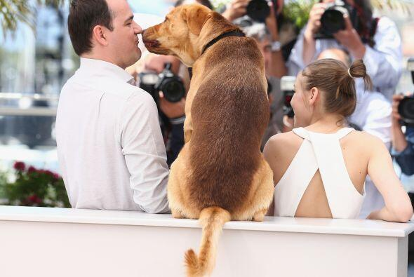 Ya que por esta vez no fue un perro de raza el protganista.