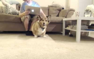 perros debate