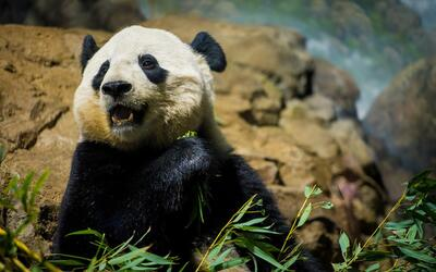 La panda Bao Bao se va de Washington a China