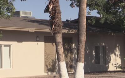 Inquilinos de complejo de apartamentos denuncian desalojo injusto