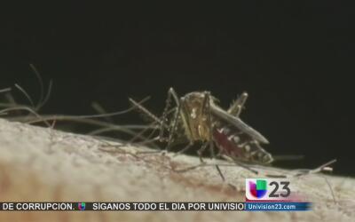Refuerzan la lucha contra los mosquitos ante el aumento de casos de zika