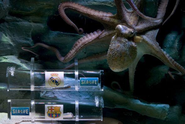 En el acuario de Benalmadena, España, el pulpo 'Iniesta' fue el encargad...