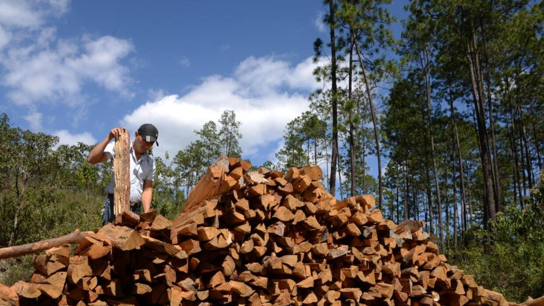 El comercio internacional de madera amenaza a casi 500 especies de verte...
