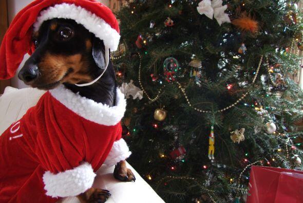 Esta Navidad está de regreso con sus increíbles 'outfits'...