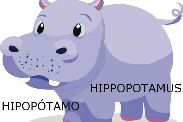 "HIPOP""TAMO - HIPPOPOTAMUS"