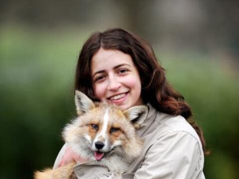 El zorro tiene una excelente relación con los dos perros de su du...