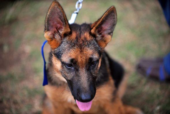 La correa de tu perro debe ser suficientemente resistente ya que un perr...