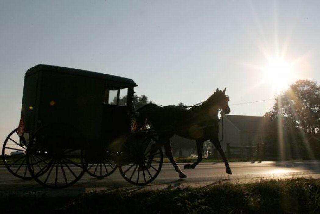 Como no utilizan autos o cualquier vehículo motorizado, se movilizan en...