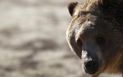 ¿Cómo convivir con los osos en la temporada de primavera?