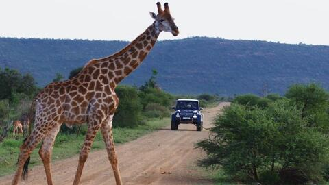 En Video: De safari en una camioneta de $550,000