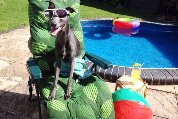 Rupert con todo el look para tomar el sol y refrescarse en la alberca.