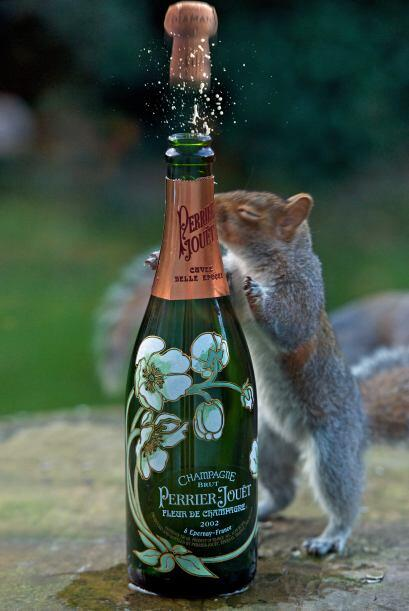 O este otro a punto de celebrar con una botella de 'champagne' recién ab...