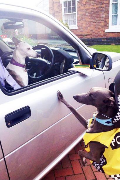 Para la seguridad del vecindario, el canino también puede fungir como pe...