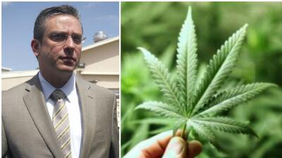 Gobernador legalización de la marihuana