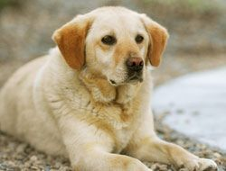 Atleta ganó el oro canino en Sochi 866ed4ac5cf8485fa02e79efe878586a.jpg