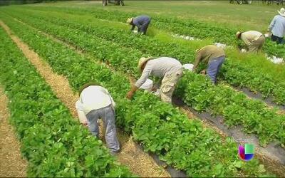 Programa agrícola asegura empleo temporal a trabajadores del campo