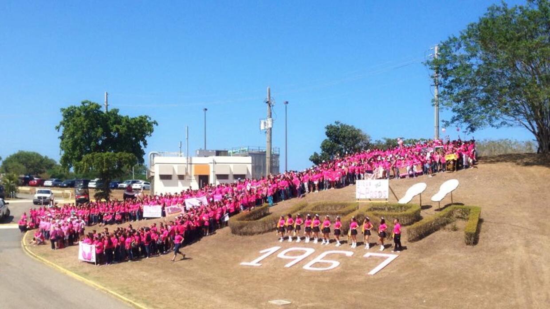 Lazo rosado en la UPR de Arecibo