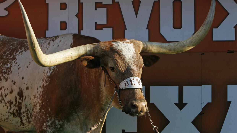 Fallece Bevo XIV, la mascota de la Universidad de Texas
