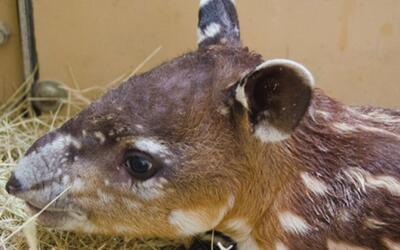 El Zoológico de Houston le da la bienvenida a un nuevo miembro