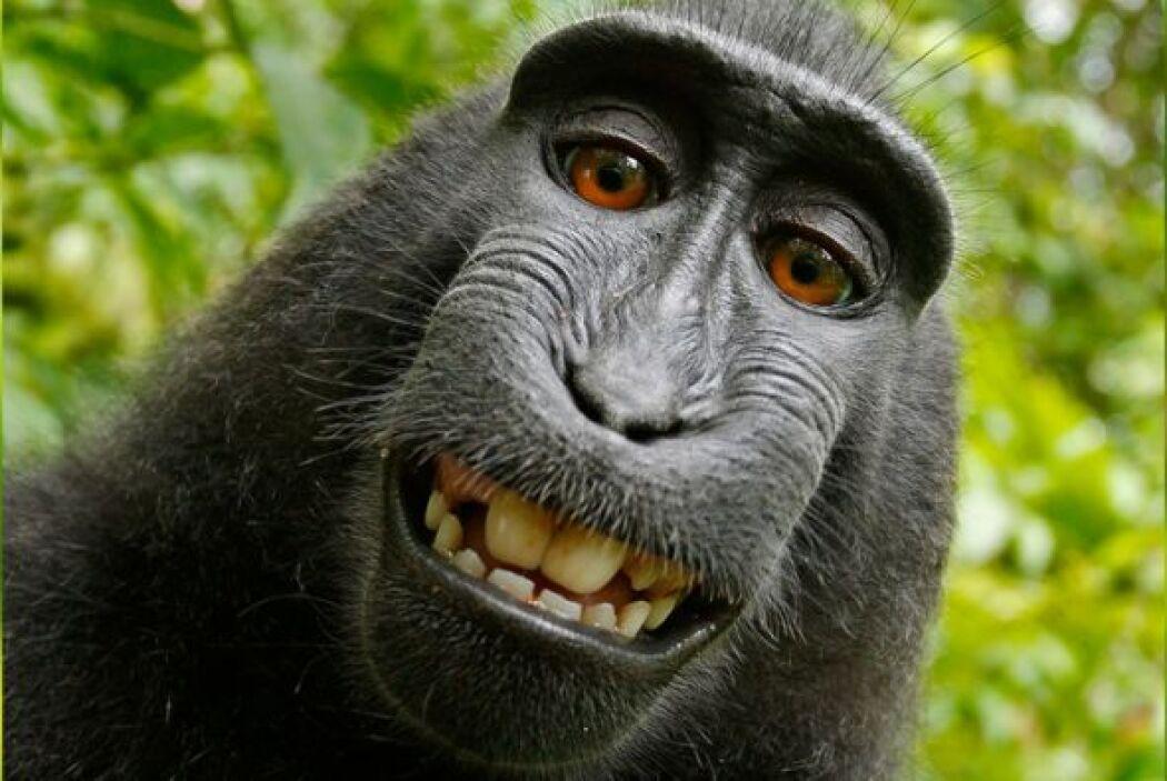 Un mono muy travieso tomó la cámara de un fotógrafo que estaba en su háb...