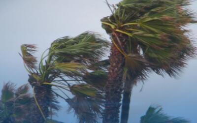 Fuertes vientos dejan estragos
