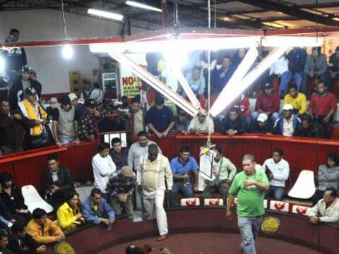 La tradición ecuatoriana de la pelea de gallos reúne el primer fin de se...